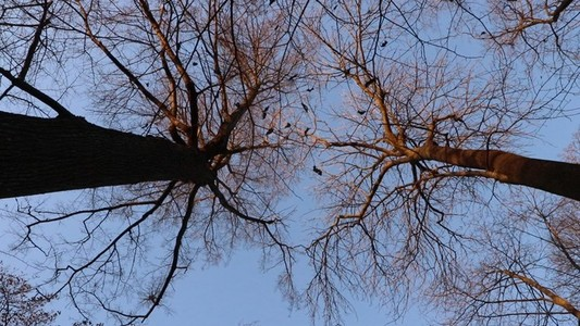 Two Trees Crown Branches